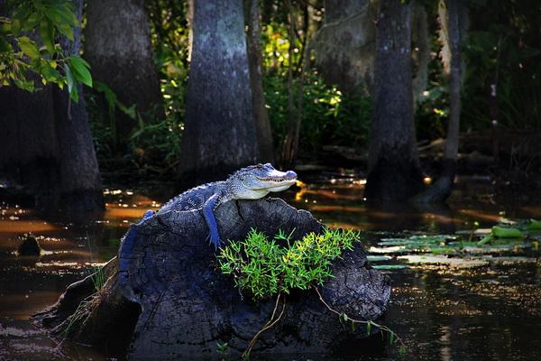 Самостоятельные водные прогулки по озеру Каддо небезопасны