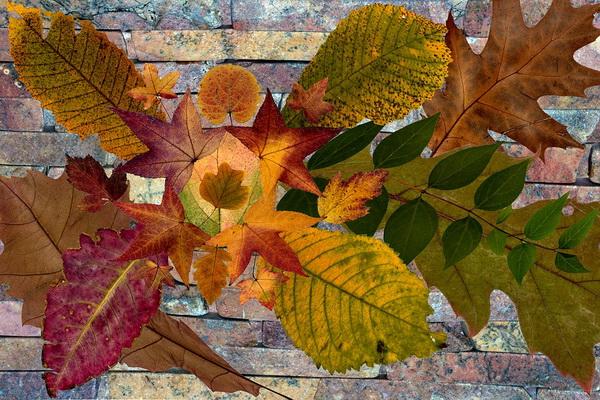 Флористика из осенних листьев