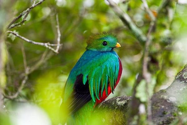 Фото птицы квезаль