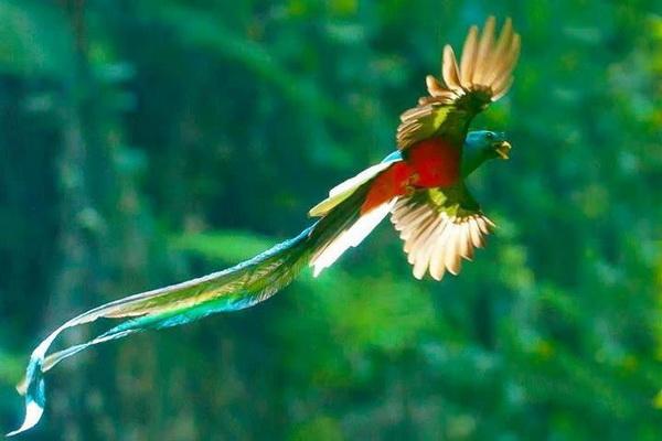 Легенды о птице квезаль