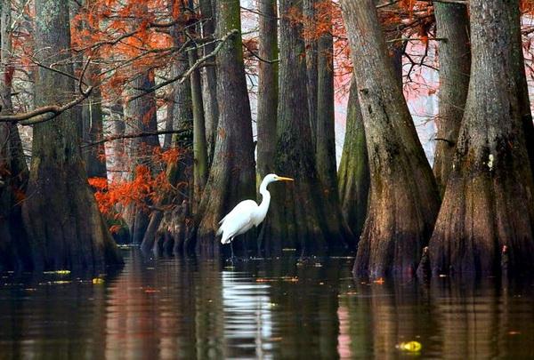 Осень на озере Каддо
