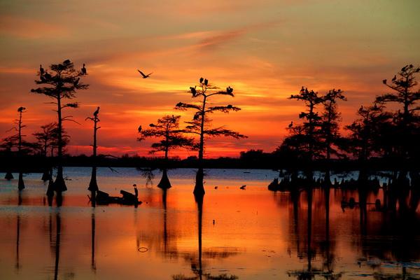 Закат на озере Каддо