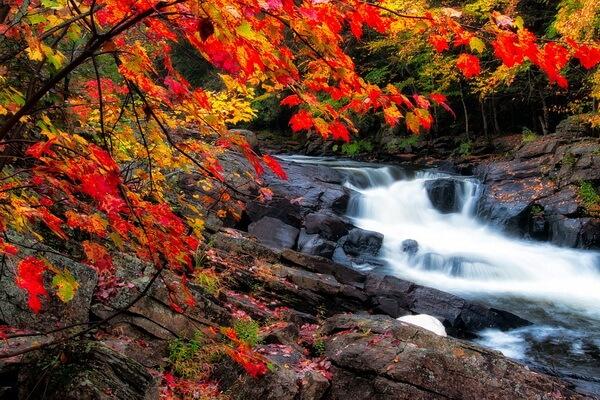 Чем заняться осенью - идеи интересного досуга