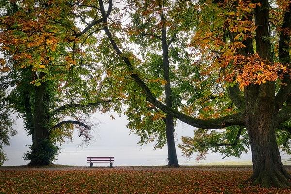 Чем интересным заняться осенью на улице - идеи досуга