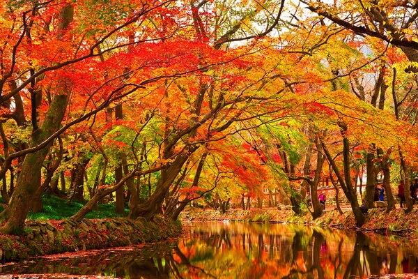 Осенняя пора - лучшие идеи, чем заняться осенью