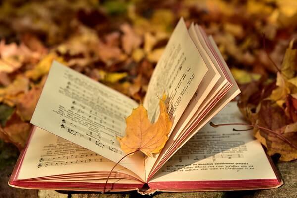 Чем заняться осенью - идеи для вдохновения