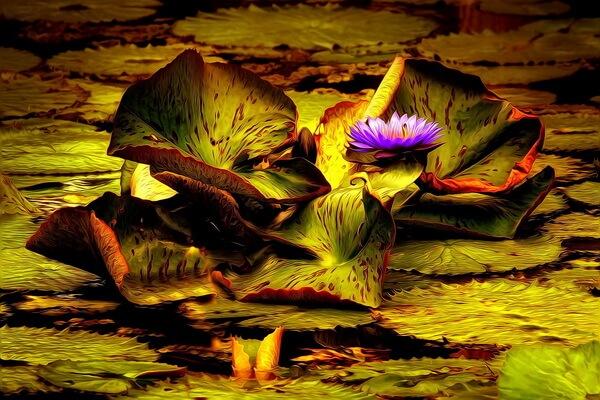 Цветы, которые цветут ночью, с фото и описанием - Тропические кувшинки, цветущие ночью