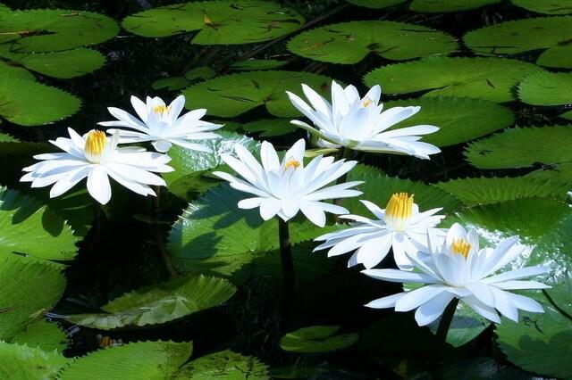 Цветы, которые цветут ночью - популярные ночные растения