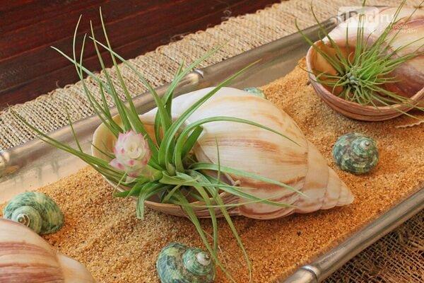 Декор из морских раковин в интерьере