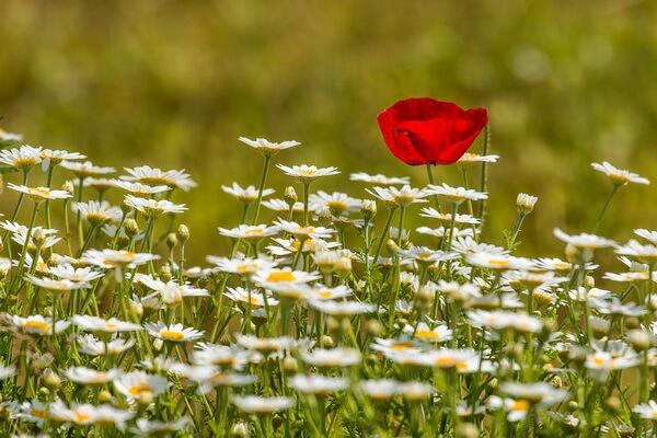 Фотосессия в ромашковом поле - где и когда возможна