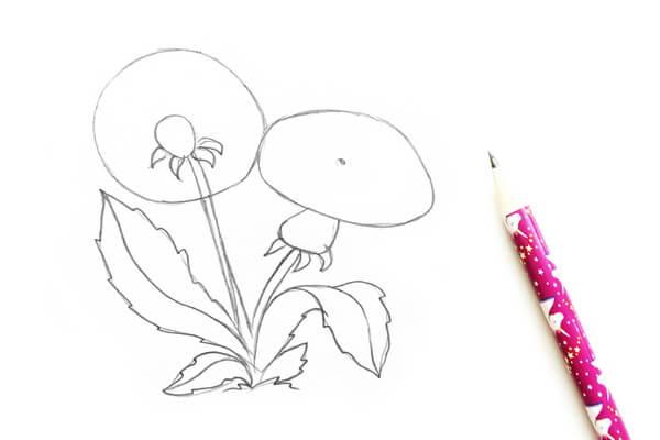 Как нарисовать одуванчик карандашом поэтапно - шаг 2