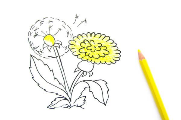 Как нарисовать одуванчик карандашом поэтапно - шаг 5