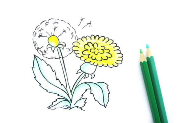Как нарисовать одуванчик карандашом поэтапно - шаг 6