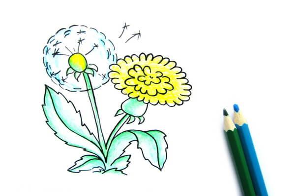 Как нарисовать одуванчик карандашом поэтапно - шаг 7