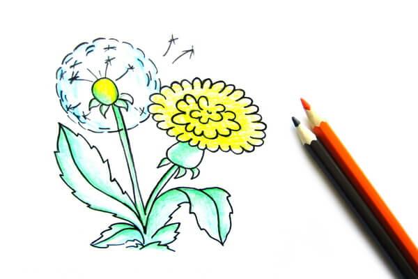 Как нарисовать одуванчик карандашом поэтапно - шаг 8