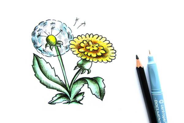 Как нарисовать одуванчик карандашом поэтапно - шаг 9