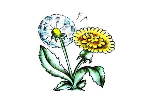 Красивый рисунок одуванчиков карандашами поэтапно - урок рисования для начинающих