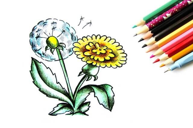 Как нарисовать одуванчик карандашом поэтапно - урок рисования для начинающих