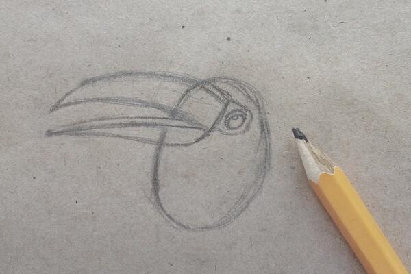 Как нарисовать тукана поэтапно - шаг 2