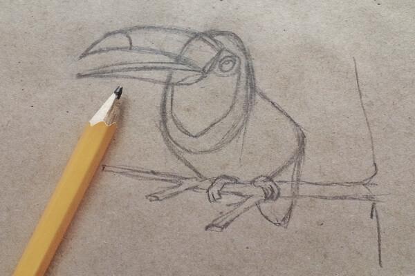 Как нарисовать тукана поэтапно - шаг 4