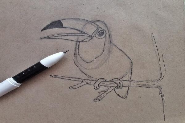 Как нарисовать тукана поэтапно - шаг 5