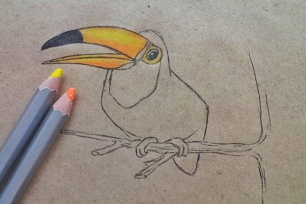 Как нарисовать тукана поэтапно - шаг 6