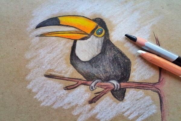 Как нарисовать тукана поэтапно - шаг 9
