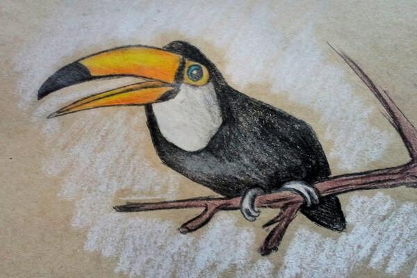 Рисунок тукана карандашом - пошаговый урок рисования карандашом для начинающих