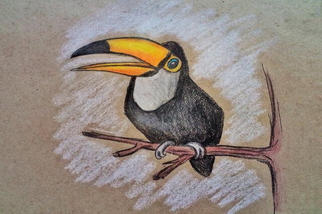 Как нарисовать тукана - пошаговый урок рисования карандашом для начинающих