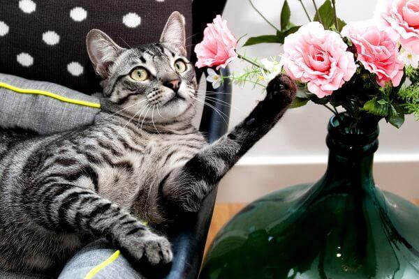 Почему коты едят цветы