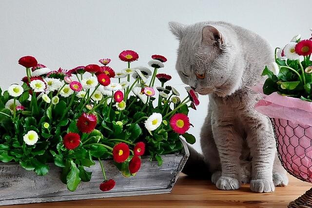 Как отучить кота есть цветы