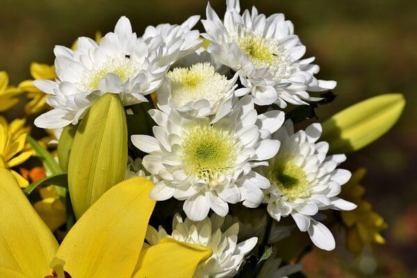 Красивые цветы, которые цветут осенью - Хризантемы