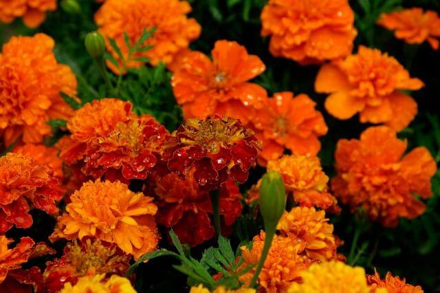 Красивые осенние цветы, которые цветут осенью - фото, названия, описание