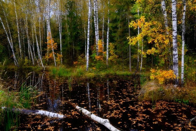 Красивые осенние пейзажи с фото - Болото осенью