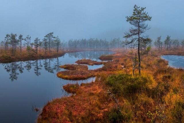 Красивые осенние пейзажи болота