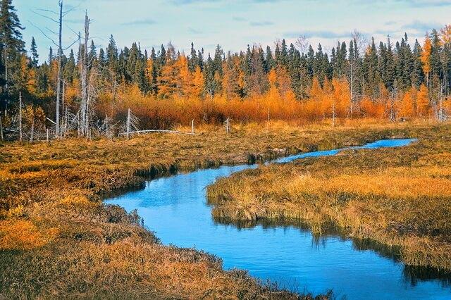 Красивые пейзажи болота осенью