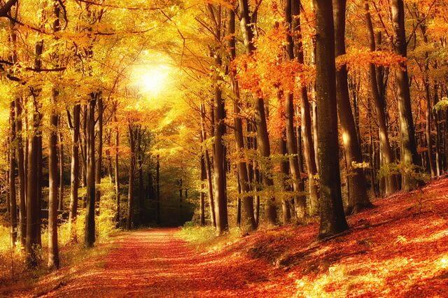 Красивые осенние пейзажи - Лес осенью