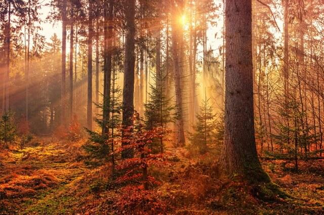 Красивые осенние пейзажи - Красивые фото осеннего леса