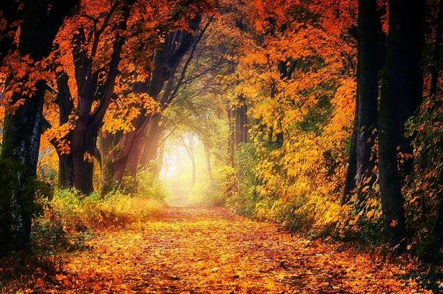 Красивые пейзажи осеннего леса