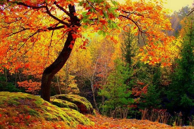 Красивые осенние пейзажи для вдохновения - Осенний лес