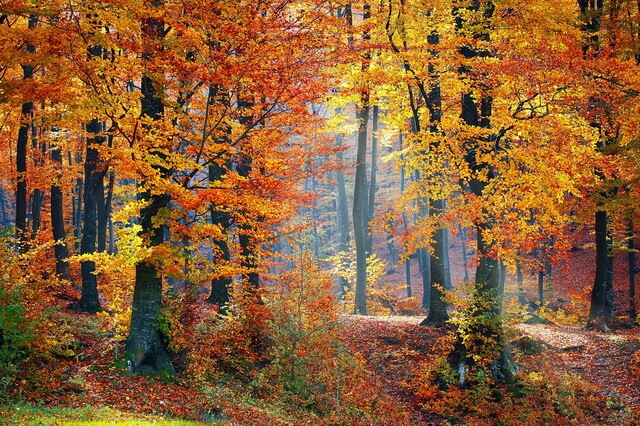 Красивые фото осеннего леса - красивые пейзажи для вдохновения