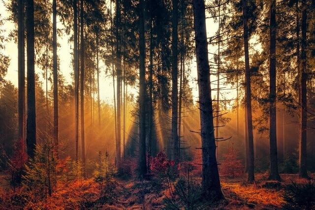 Красивые осенние пейзажи для вдохновения