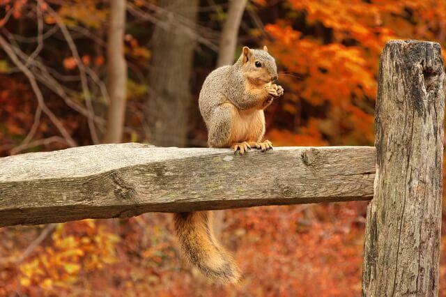 Красивые фото осеннего леса