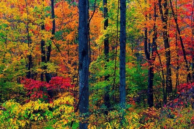 Красивые осенние пейзажи леса
