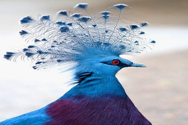 Красивые птицы с хохолком - фото, названия, описание