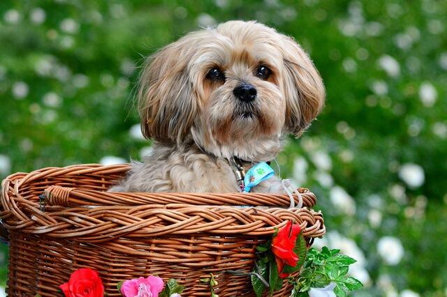 Самые лучшие породы собак для квартиры - фото, названия, описание
