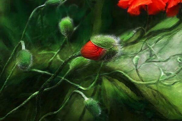 Маки в цифровой живописи Кэрол Каваларис