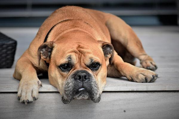 Забота о брошенных собаках