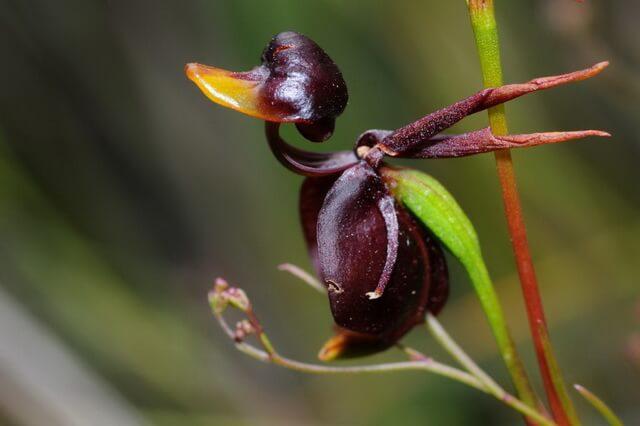 Необычные орхидеи - виды с фото и описанием