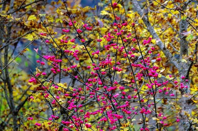 Осенние декоративные кустарники - фото, названия, описание
